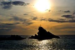 Di olivo al tramonto Fotografia Stock