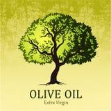 Di olivo Albero verde di vettore foglie verdi gialle Fotografie Stock Libere da Diritti