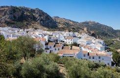 Di olivo circondano il hilltown di Zuheros in Andalusia Immagini Stock Libere da Diritti