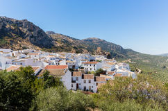 Di olivo circondano il hilltown di Zuheros in Andalusia Immagine Stock Libera da Diritti