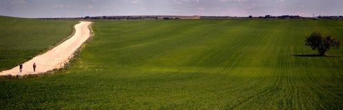 Di olivo nel campo e biciclette in itinerario Immagine Stock