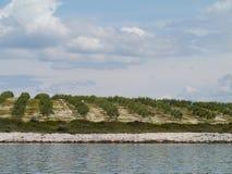 Di olivo nelle file in Croazia Fotografie Stock