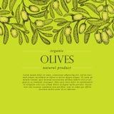 Di olivo si ramifica insegna di vettore Incisione dello stile disegnato a mano Schizzo di vettore Fotografia Stock Libera da Diritti