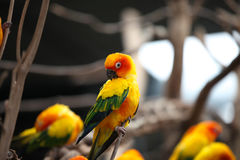 Di pappagalli colorati multi luminosi si siedono su un ramo Immagini Stock