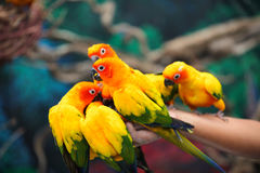 Di pappagalli colorati multi luminosi si siedono su un ramo Fotografia Stock
