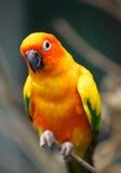 Di pappagalli colorati multi luminosi si siedono su un ramo Immagini Stock Libere da Diritti