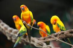 Di pappagalli colorati multi luminosi si siedono su un ramo Fotografie Stock