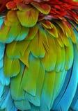 Di piume colorate d'arcobaleno dell'ara Fotografia Stock