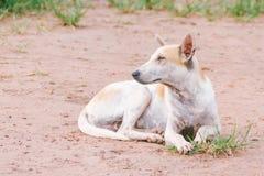 Di razza bianco - povero anziano e cane malato della via Fotografia Stock Libera da Diritti