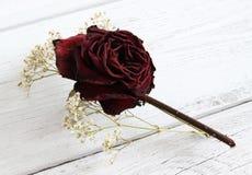 Di rosa secco e gypsophila Immagine Stock