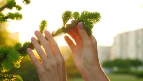 Di Sun della luce di lampeggio dita della donna comunque che toccano il ramo di albero archivi video