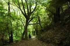 Di un percorso coperto di foglia attraverso una valletta della foresta Immagine Stock Libera da Diritti