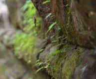 Di una roccia coperta di muschio in un tempio Fotografie Stock