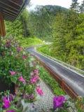 Di Val Gardena сельвы Стоковые Изображения