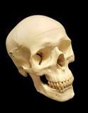 3/4 di vista del cranio umano Fotografie Stock