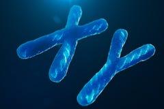 Di x-y-cromosomi con DNA che porta il codice genetico Concetto della genetica, concetto della medicina Futuro, mutazioni genetich royalty illustrazione gratis