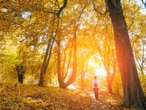 Dia bonito do outono na floresta, mulher de passeio imagem de stock royalty free