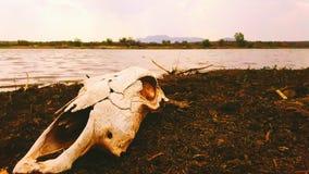 Dia bonito no lago Foto de Stock Royalty Free