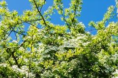 Dia bonito no parque com árvore de Bloomong Imagens de Stock Royalty Free