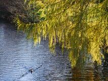 Dia brilhante do outono no parque Fotos de Stock