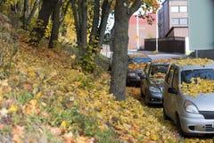 Dia brilhante do outono no parque fotografia de stock