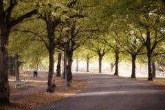 Dia brilhante do outono no parque foto de stock