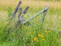 Dia brilhante na exploração agrícola Fotografia de Stock Royalty Free