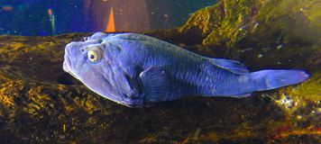 Dia chuvoso no aquário dos oceanos de TownTwo do cabo fotografia de stock