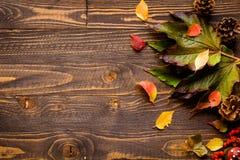 Dia da ação de graças, fundo das folhas de outono Fotos de Stock Royalty Free