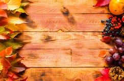 Dia da ação de graças, fundo das folhas de outono Fotos de Stock