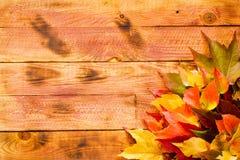 Dia da ação de graças, fundo das folhas de outono Fotografia de Stock Royalty Free