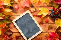 Dia da ação de graças, fundo das folhas de outono Imagem de Stock Royalty Free