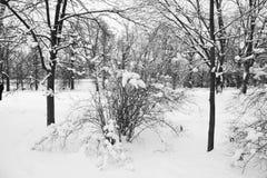 Dia da neve do inverno de Moscou Rússia em um parque da cidade foto de stock
