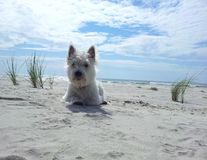 Dia da praia Fotografia de Stock