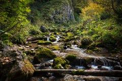 Dia da queda do rio da montanha no arbusto e nas árvores com pedras redondas Imagem de Stock