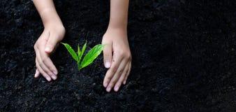 Dia da Terra do ambiente nas mãos das árvores que crescem plântulas Árvore fêmea da terra arrendada da mão do fundo do verde de B foto de stock