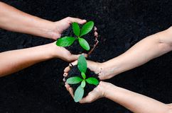 Dia da Terra do ambiente nas mãos das árvores que crescem plântulas Árvore fêmea da terra arrendada da mão do fundo do verde de B foto de stock royalty free