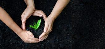 Dia da Terra do ambiente nas mãos das árvores que crescem plântulas Bokeh esverdeia a mão fêmea do fundo que guarda a árvore no g fotografia de stock royalty free