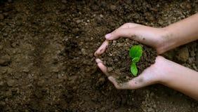 Dia da Terra do ambiente nas m?os das ?rvores que crescem pl?ntulas ?rvore f?mea da terra arrendada da m?o do fundo do verde de B imagens de stock