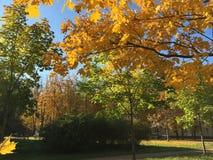 Dia de Autumn Sunny, folhas amarelas brilhantes imagem de stock