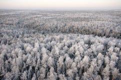 Dia de congelação na floresta Imagem de Stock