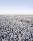 Dia de congelação na floresta Imagem de Stock Royalty Free