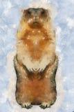 Dia de Groundhog Fotografia de Stock