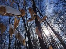 Dia de inverno Foto de Stock