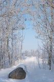 Dia de inverno frio Fotos de Stock Royalty Free