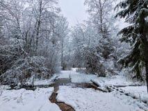 Dia de inverno na floresta Imagem de Stock Royalty Free