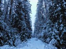 Dia de inverno na floresta Fotografia de Stock Royalty Free