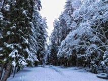 Dia de inverno na floresta fotos de stock royalty free