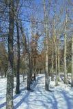 Dia de inverno nevado fotografia de stock royalty free