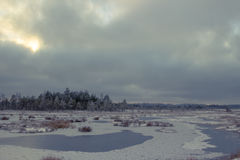 Dia de inverno no pântano Imagem de Stock Royalty Free